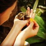 The gorgeous tortoises that live in the garden