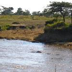 View of Mara and hippos from Tent
