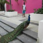 The Hotel Peacock