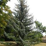 un arbre centenaire