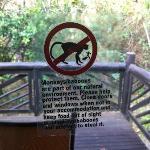 attenti ai babbuini