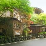 Tochigiku