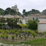 Vineyard in town (Boulbon)