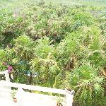 """Backyard"" Mangroves seen from our private balcony"