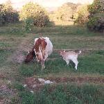 Gringa y Chapita, madre e hija