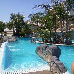piscine adulte