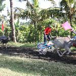 Buffalow races