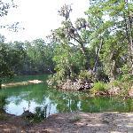 Foto de Sapelo Island National Estuarine Research Reserve