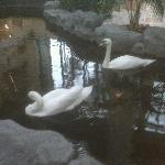 These lovely swans welcome you when you arrive.