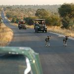 During one of our drives, wild dogs