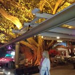 The tree makes a complete canopy for the restaurant