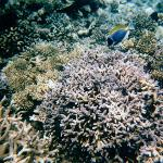 snorkeling with colorful fish every day