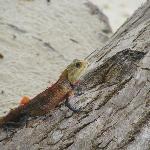 friendly lizard
