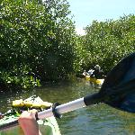 Kayaking through the mangroves Bonaire