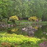 Ogród Japoński 2
