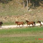 A group of Horses galloping by... they were beautiful