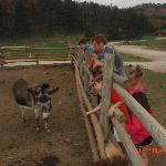 Feeding the donkey :)