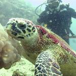 Hawksbill Sea Turtle (and me)