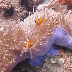 I found Nemo!!!!!