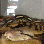Reptile room tenant