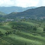 Nearby walking path overlooking tea terraces, very beautiful and scenic.