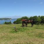Die Weiden gehören zum Haus, die Pferde sind zu Gast ...