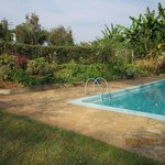 Pool and gardens (46172908)