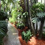 Tropical Path to the Media Room