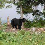 A bear seen during our morning wilderness tour.