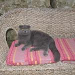 Relax felino nel divanetto del cortile!