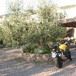 il cortile con l'ulivo