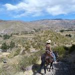 Colca Horse El Herraje