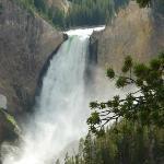 Cascada de Río de Yellowstone