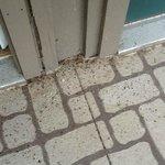 bugs on balcony outside room doorway.