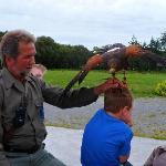 Bird of pray encouraged to fly to the hand of the proprietor just above the boy's head. He loved