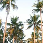 Cool coconuts