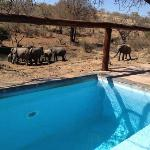 The stunning waterhole view from our (very) private plunge pool deck.