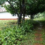 garden inside the homestay