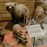 北米の動物たち