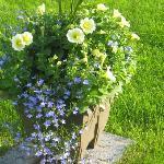My flower pot.