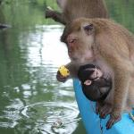 Feeding the monkeys. They jumped on to our kayaks.