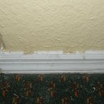 kitchen/dining room baseboard, gross