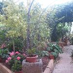 Garden at Los Rosales
