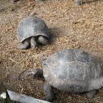 Le tartarughe giganti