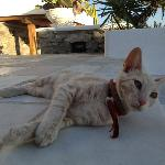 The Hotel Cat, En Lefko (the sweetest cat ever)