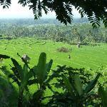 Die schönsten Aussichten auf Reisfelder