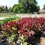 botanical gardens planting season