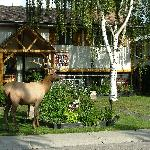 Welcome to Stella Alpina B&B