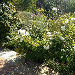 Pretty garden borders