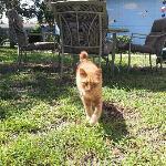 Billy, resident kitty
